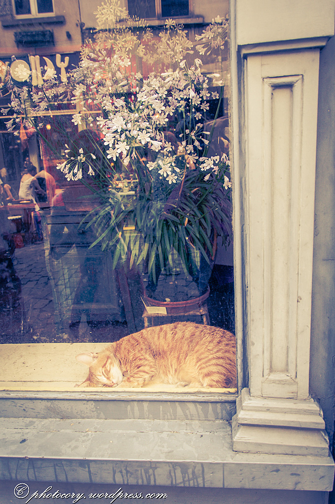 In Belgium there are many cats sleeping in the windows. And they are big! This one was very relaxed. She didn't react at all when I knocked on the window.