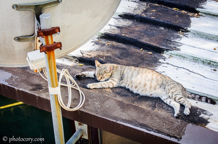 A very lazy cat! It was so hot that day!