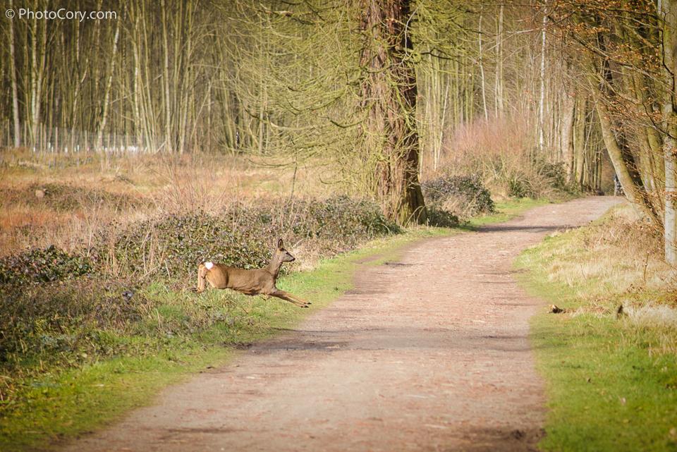 deer running in forest
