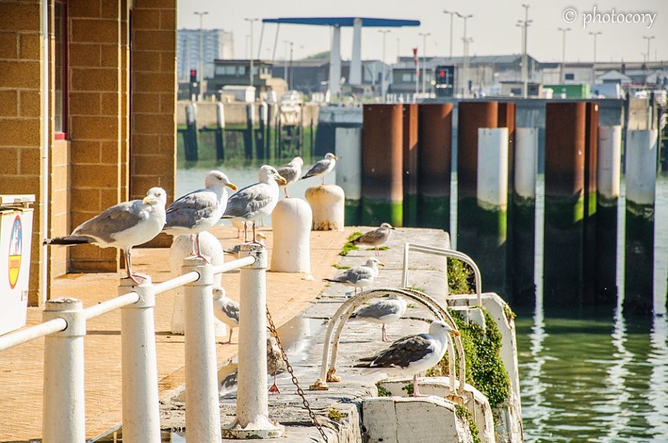 A line of seagulls