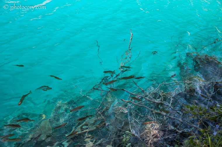 More fish at Plitvice Lakes