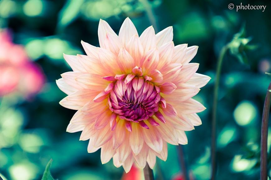 A very interesting flower