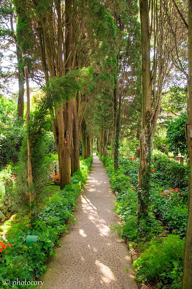 Garden at Villa san Michele