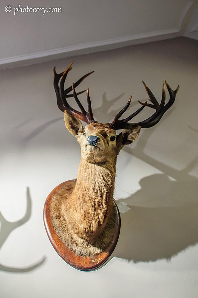 a very intrigued deer