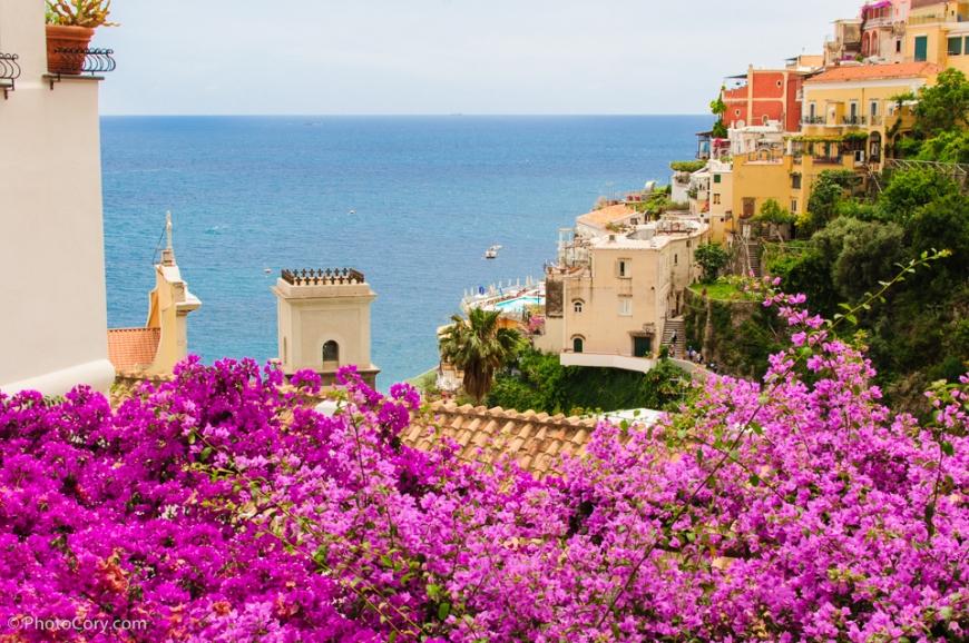 pink flowers positano view italia