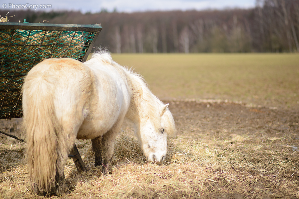 white pony, la hulpe