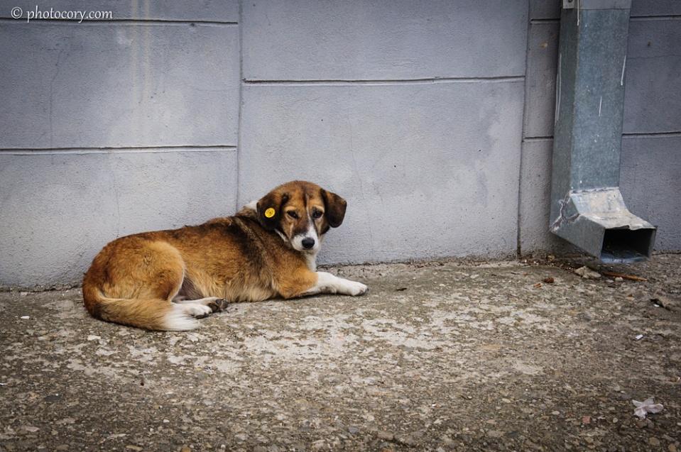 A very cute stray dog