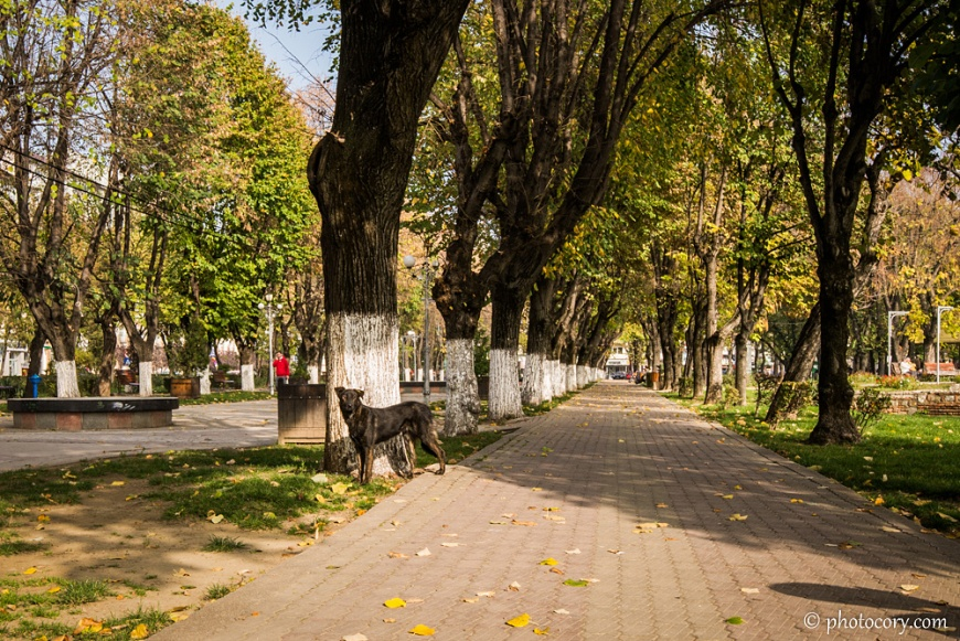 Alley with a stray dog in Central Park, Targoviste