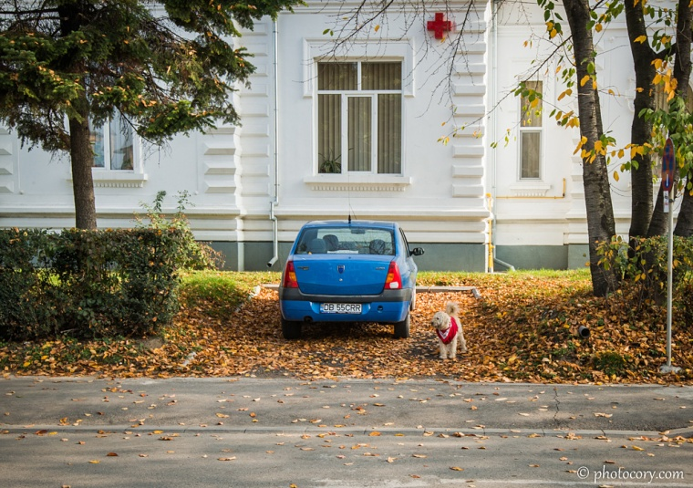 The Red Cross building in Targoviste. And a dog with a red coat.