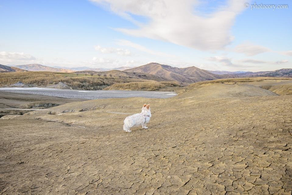 This is my doggie, Miki. She came with to visit the Mud Volcanoes in Buzau. It's possible to take your furry friend as well, just be careful not to let them step in the mud :)