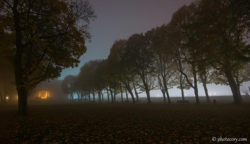Fog cinquantenaire park