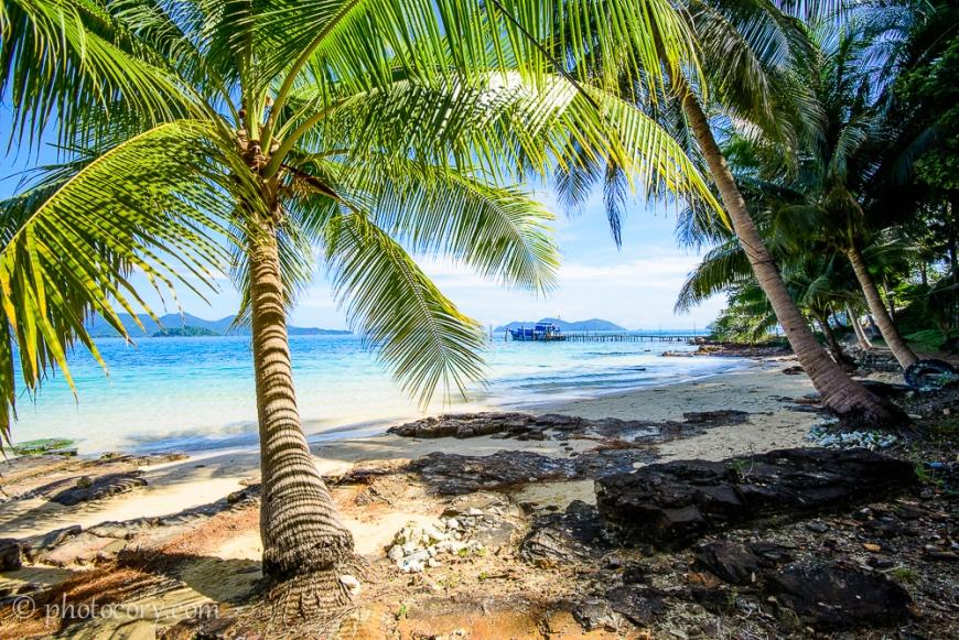beach palmtree thailand koh wai