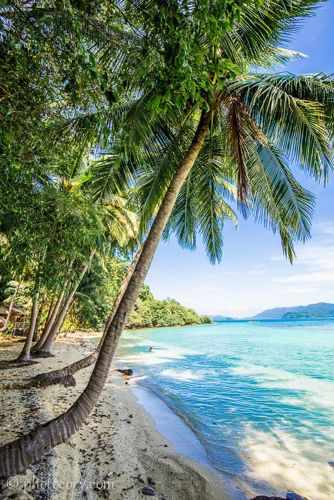 beach palmtree thailand