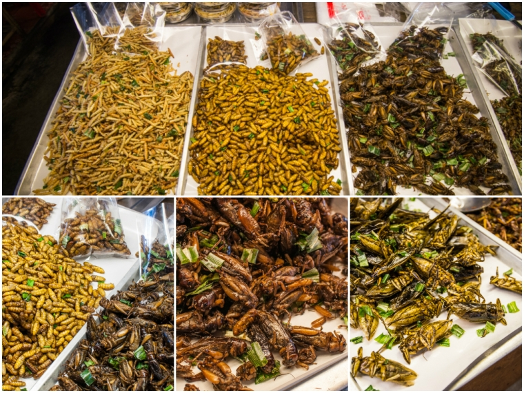 Fried crickets and bugs to eat/Greieri si gandaci prajiti gata pentru a fi mancati.