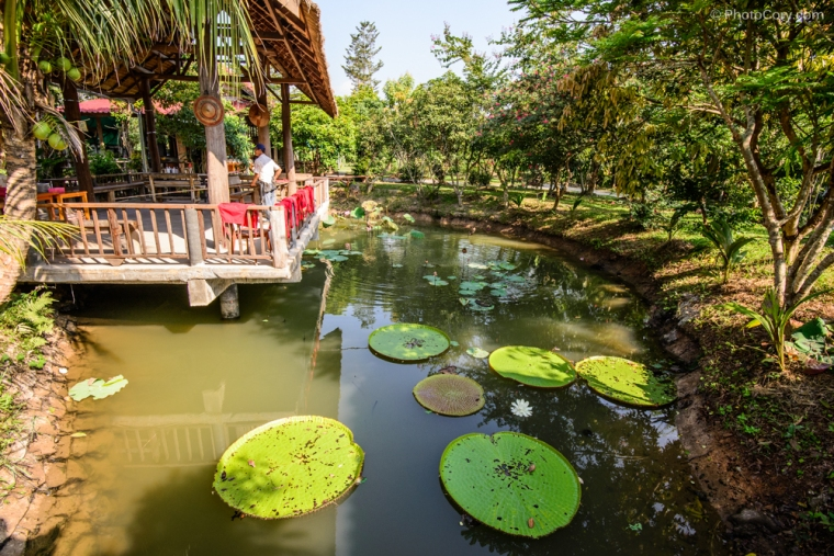 The garden of the farm, with big water lillies/ Gradina cu nuferi imensi