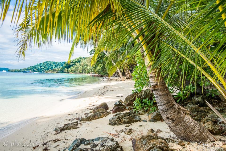 Palmtree koh wai thailand