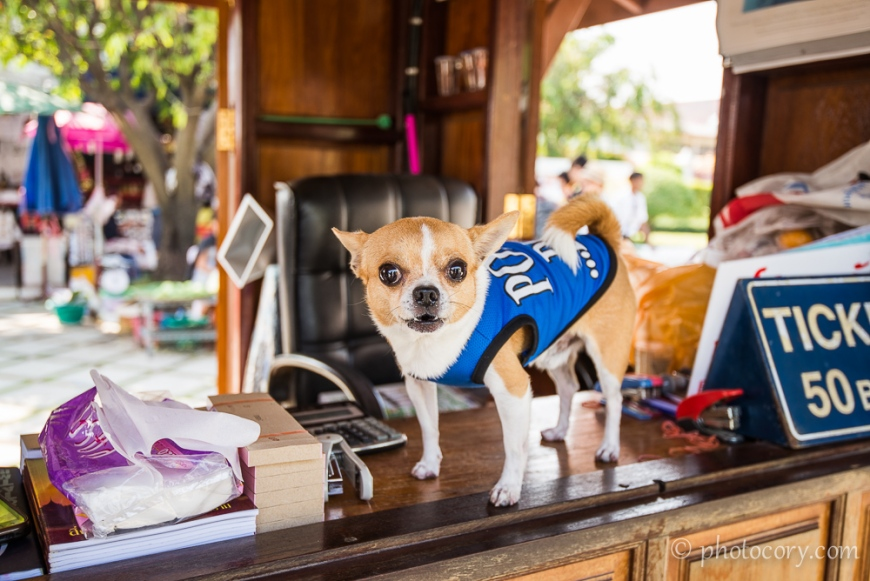 """Attention, if you are a foreigner and you don't pay the 50 Baht ticket, this fierce Police Dog will bark, and bark...and bark.../Daca nu cumperi bilet, acest """"fioros"""" caine politist va latra necontenit"""