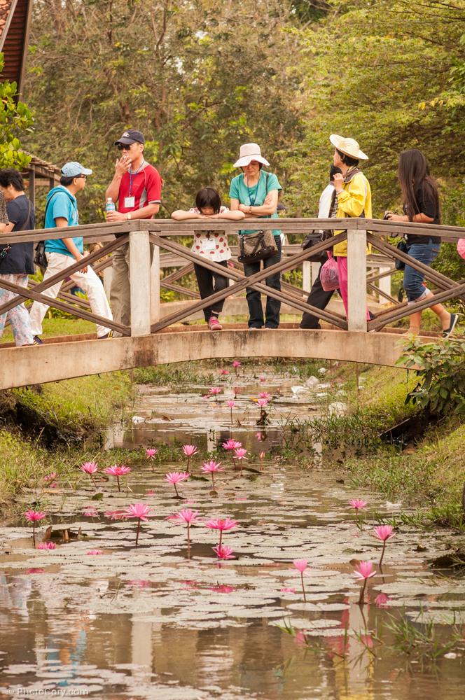 banteay srei entrance water lillies