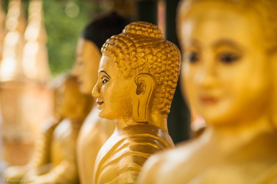 Golden Buddha statues / statui aurii reprezentandu-l pe Buddha