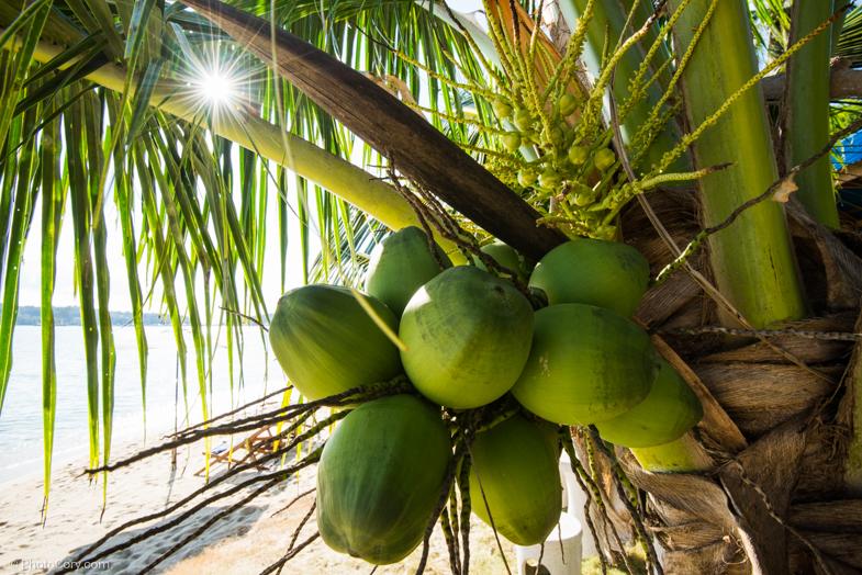 coconuts beach thailand