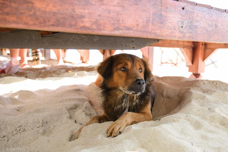 This dog was staying under my chair/ Un catel prietenos ce statea sub sezlongul meu