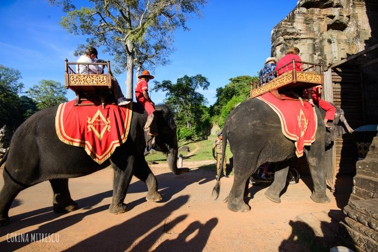 elephants bayon