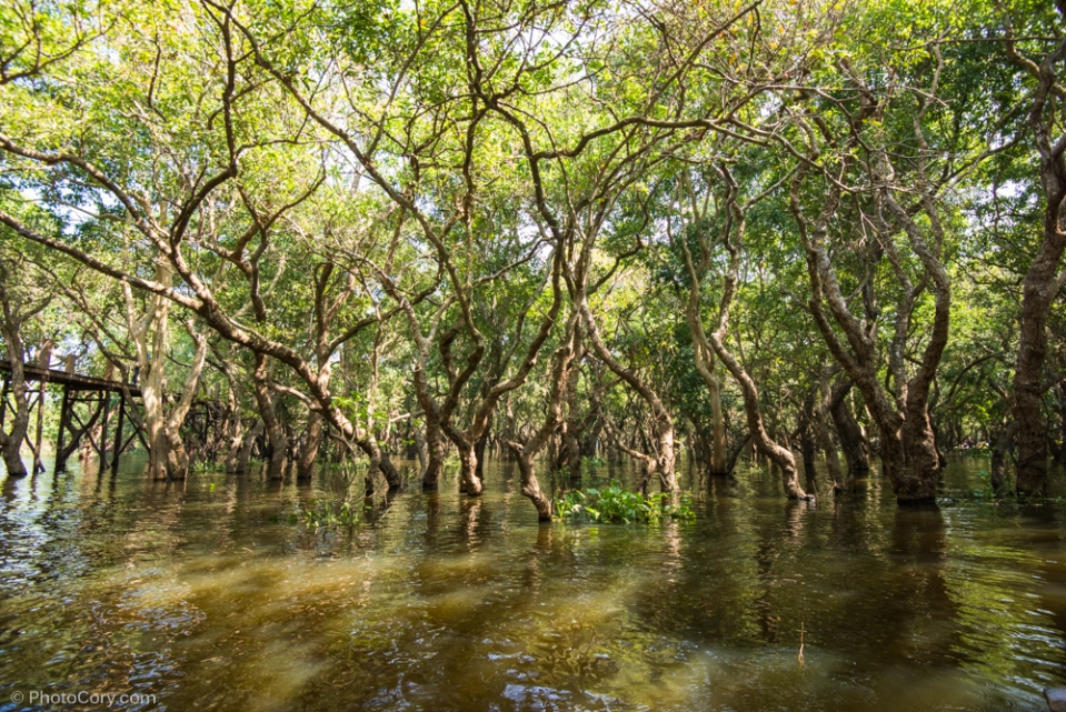 flooded forest cambodia
