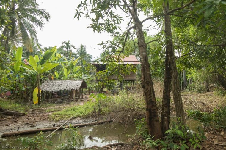 house jungle cambodia