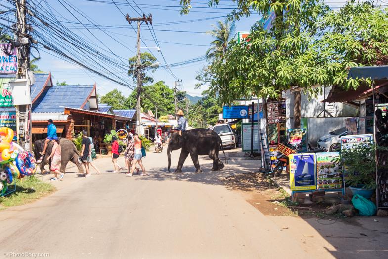Little elephants crossing the street/ Mici elefanti trec strada