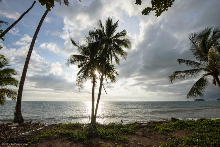 palm thailand