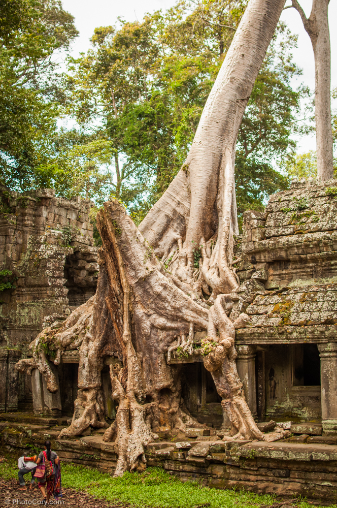 preah khan tree