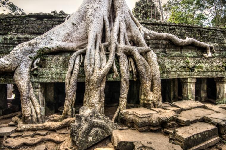 ta prohm, roots, cambodia