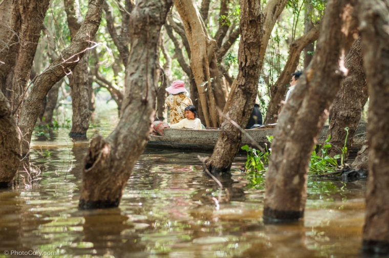the flooded forest cambodia