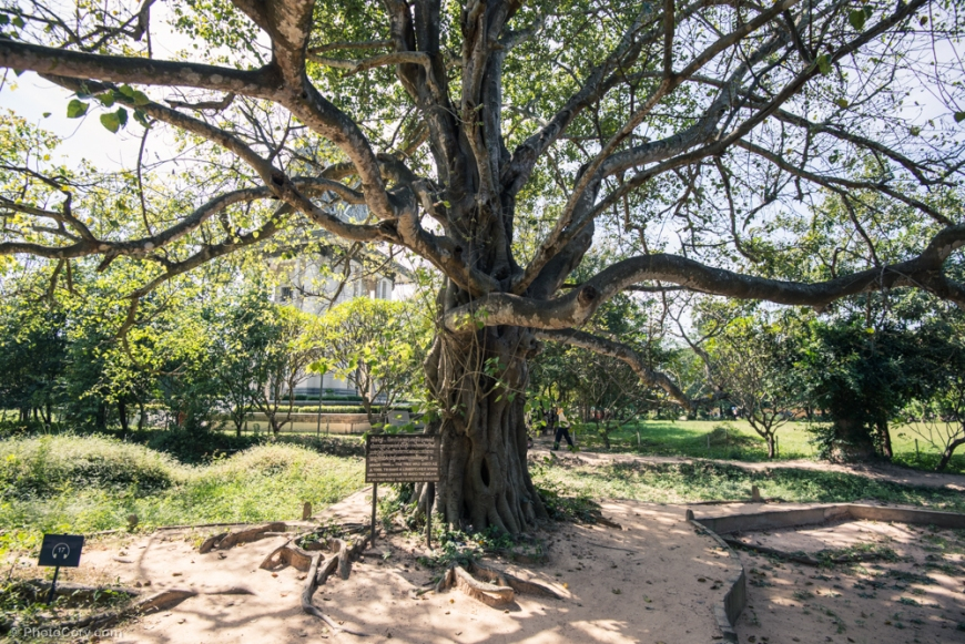 Magic tree...the tree was used for hanging a loud speaker which made loud sound to avoid the moan of victims while they were being executed / copacul magic...in acest copac se atarna o boxa uriasa cu sunetul tare pentru a acoperi urletele victimelor in timpul executiei