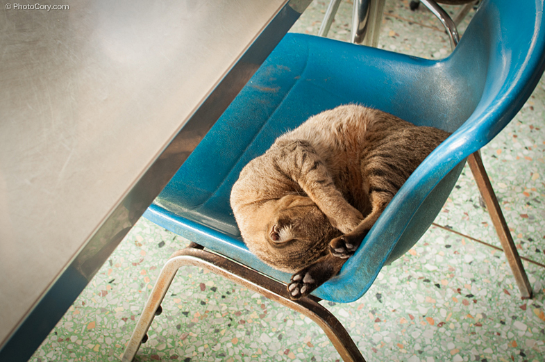 cat sleeping on chair