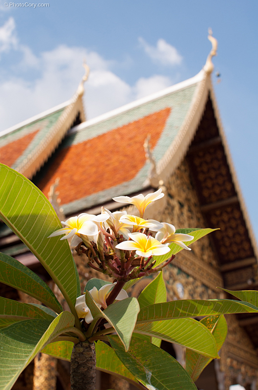 flowers temple thailand