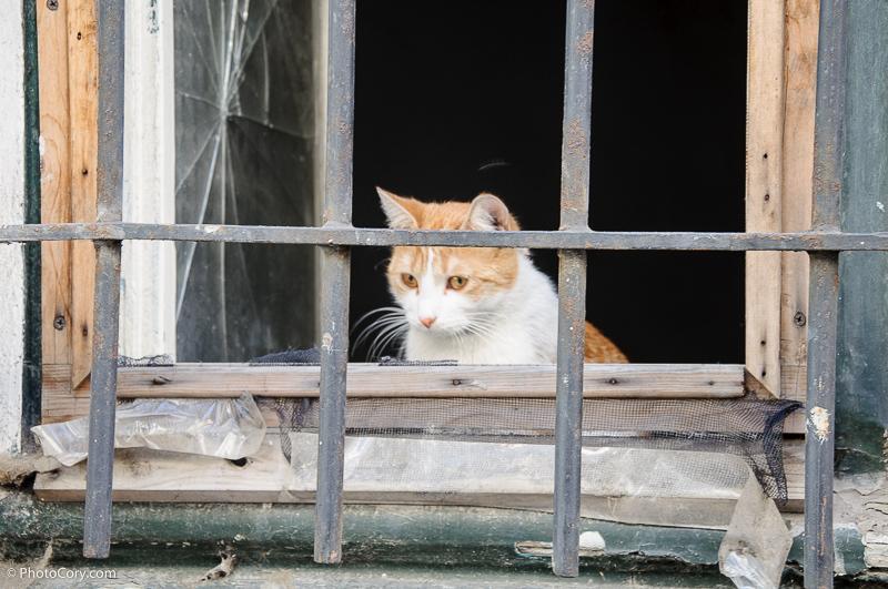 cat behind bars