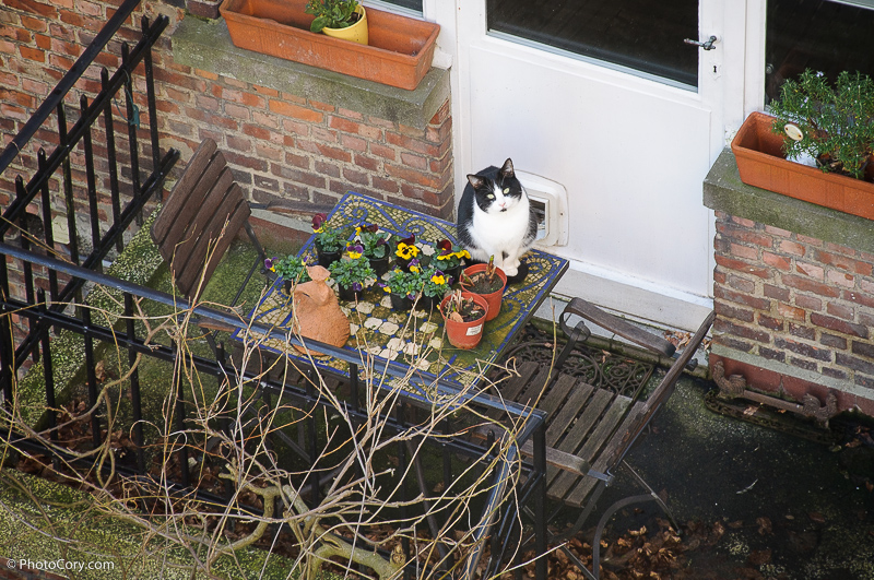 cat on the table in neihbour garden