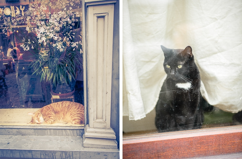 cats in window, black and white and sleeping