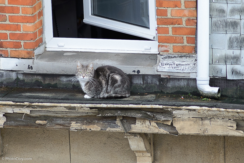 neighbours' cat on the roof