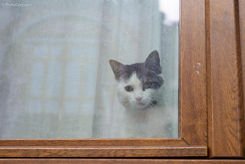 white and grey cat behind window, Belgium