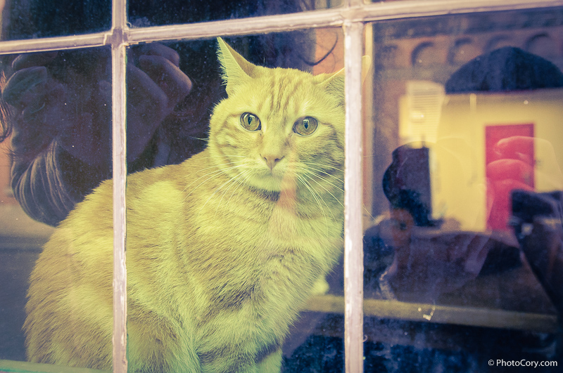 yellow cat window belgium