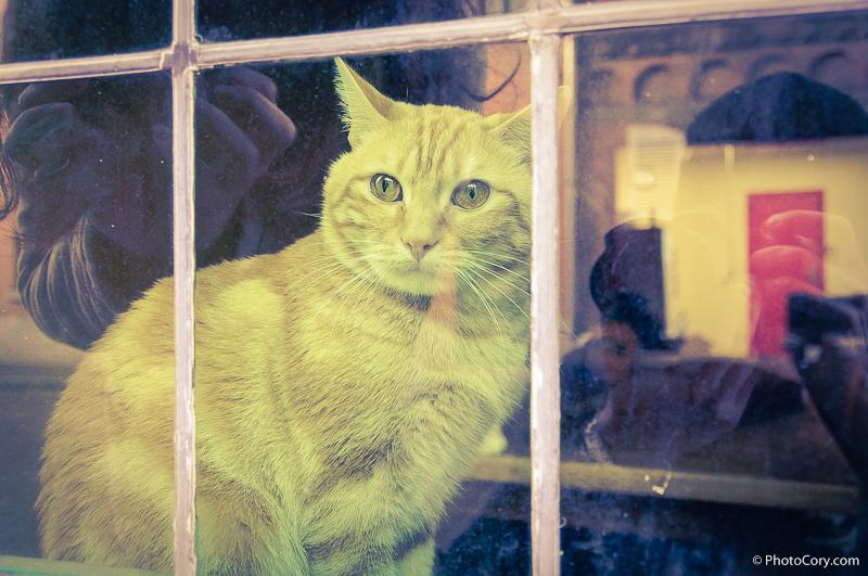 yellow cat window belgium
