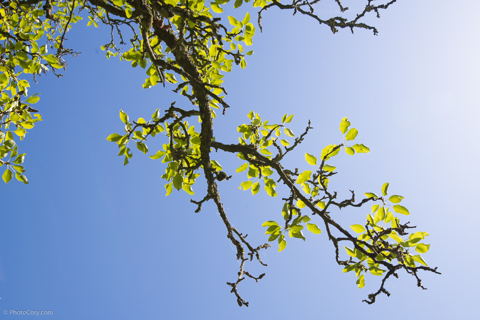 branch blue sky