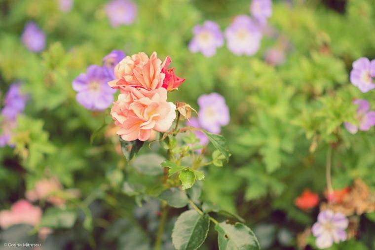 floricele