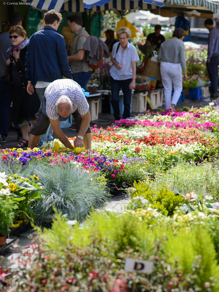 flowers sunday market flagey brussels