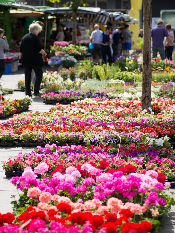 flowers sunday market ixelles flagey