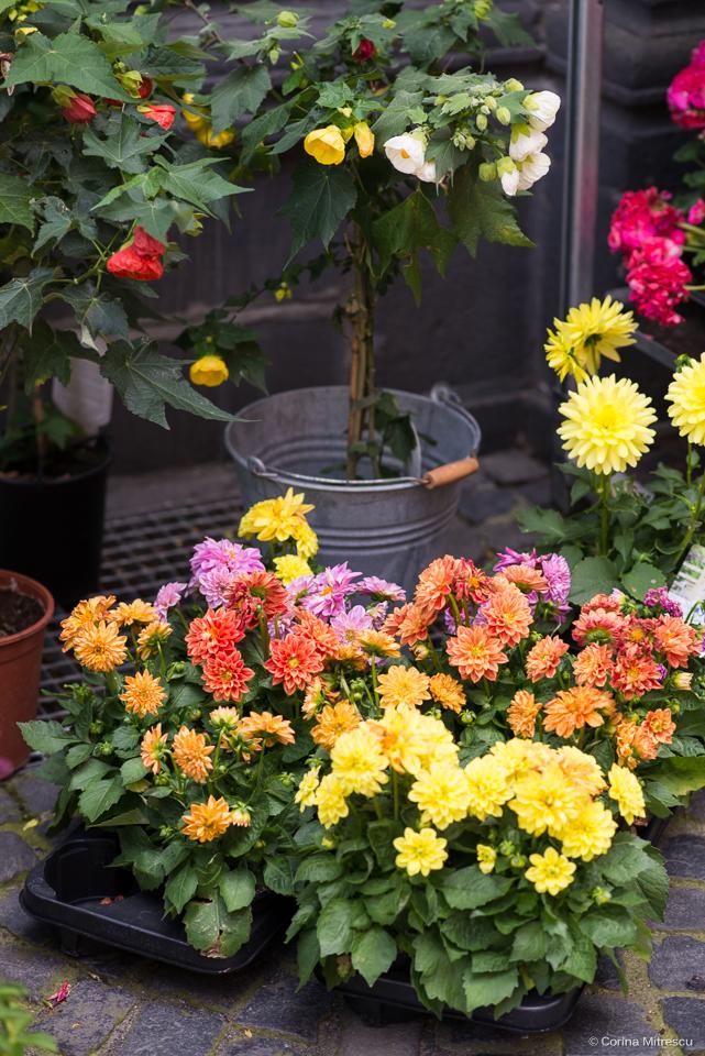 flowershop aachen
