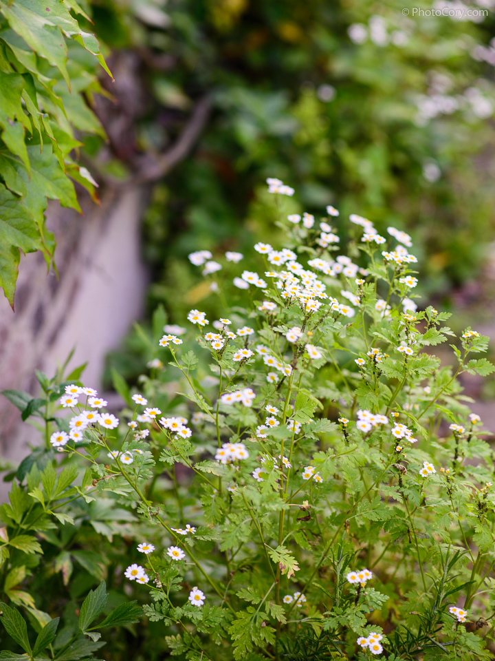 little white flowers near wall outside