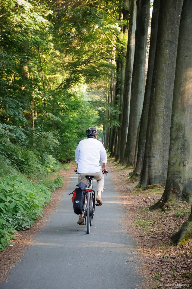 sonian forest bike